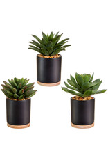 """6.75"""" Potted succulent 4002016"""