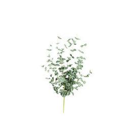 Botanical 984