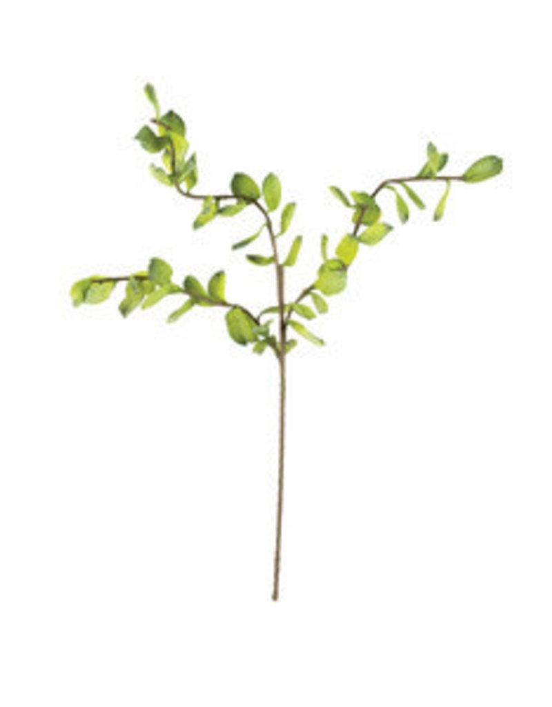 Botanical 3158