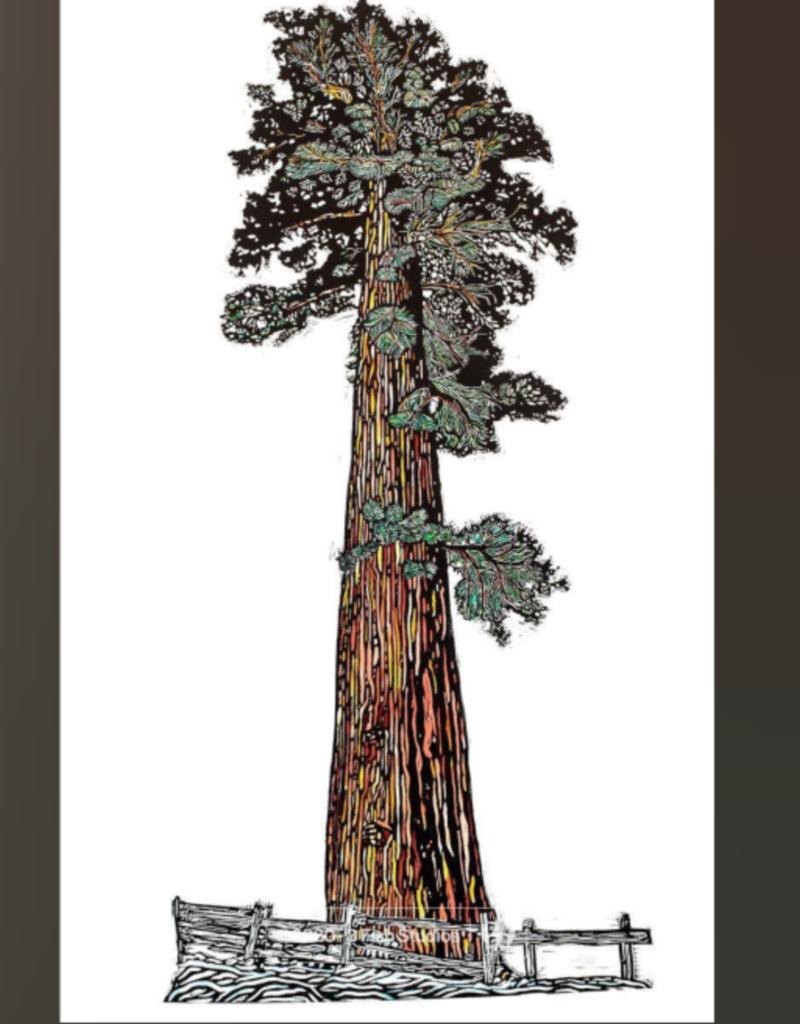 "3 Fish Studios Watercolored Sequoia Tree Print 14""x24"""