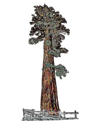 3 Fish Studios Sequoia Tree Print 14x24