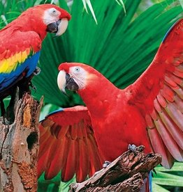 Springbok Scarlet Macaw (400pc)