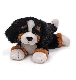 Randle, the Bernese Mountain Dog