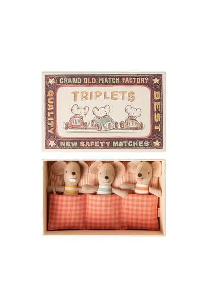 Baby Mice - Triplets in Matchbox
