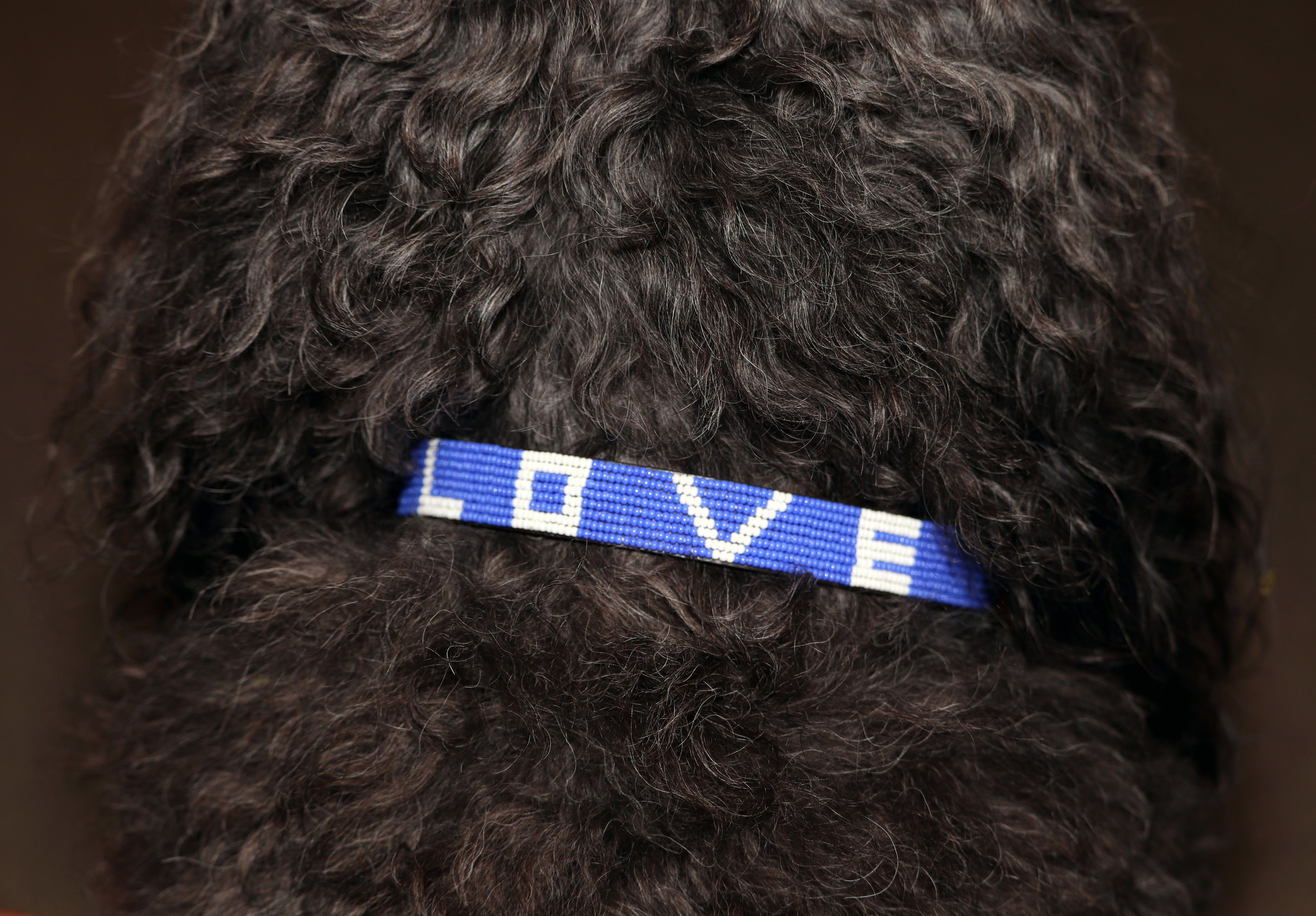 Pet Collar LOVE Cobalt Medium-2