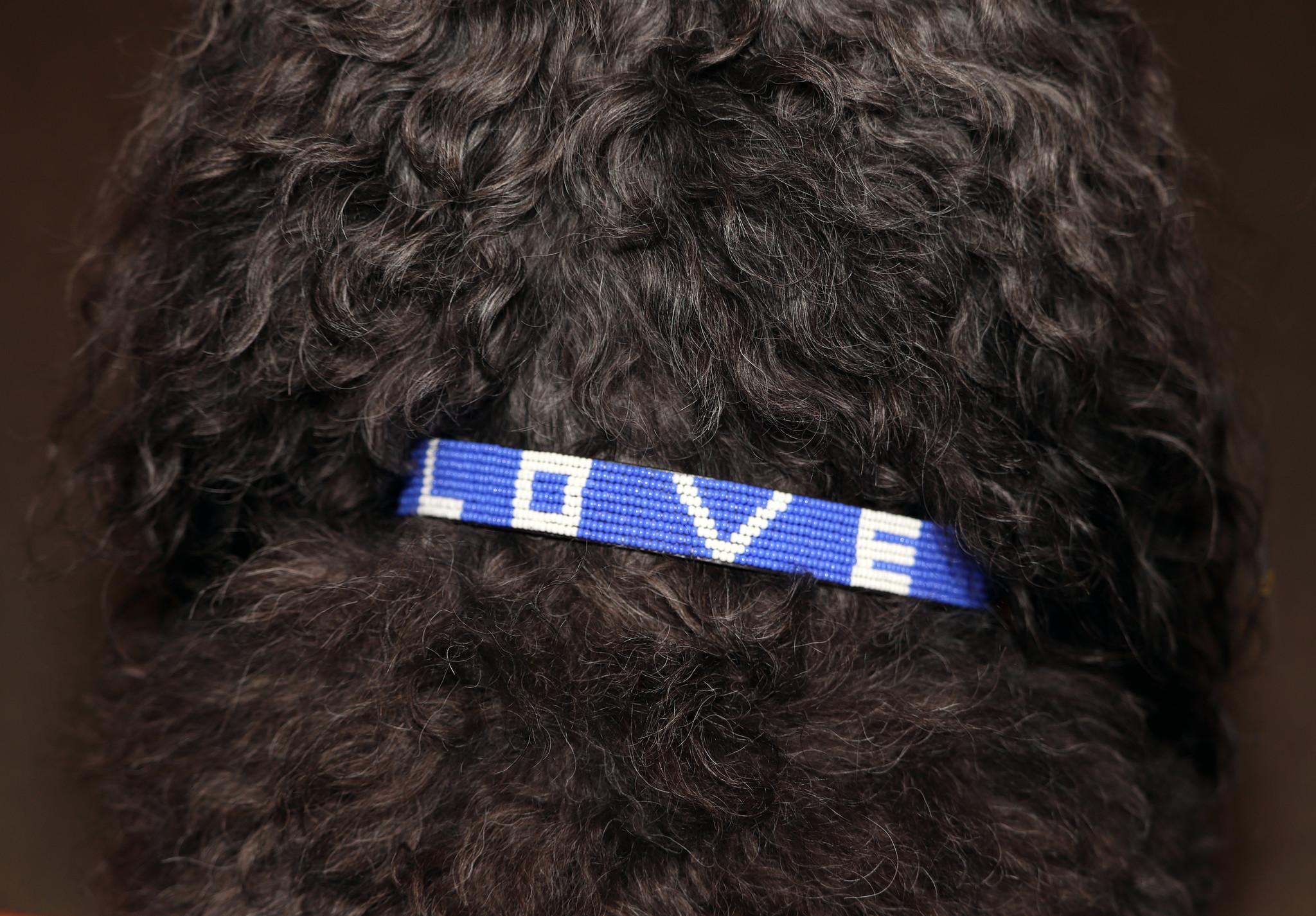 Pet Collar LOVE Teal Small-2