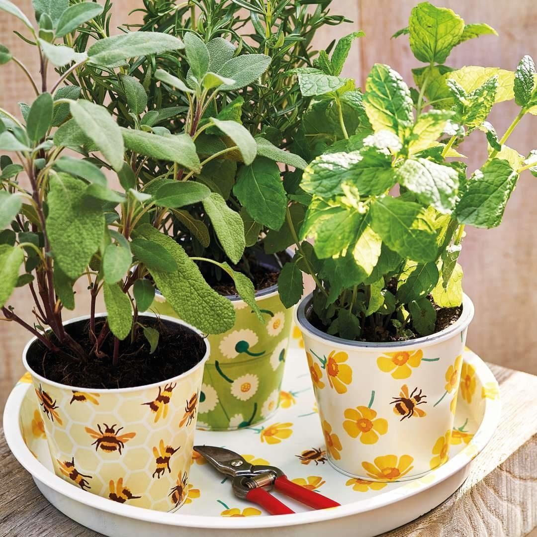 Plant Pots - Buttercup - Tin-2