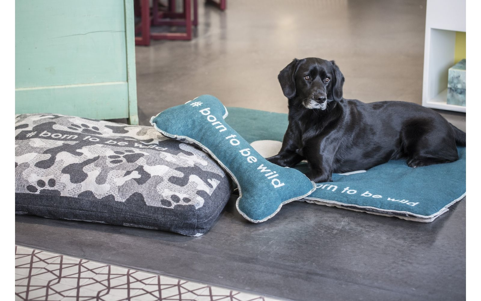 """Dog Bed """"#born to be wild""""-3"""
