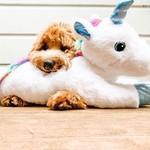 Multipet Multipet Dog Jumbo Unicorn
