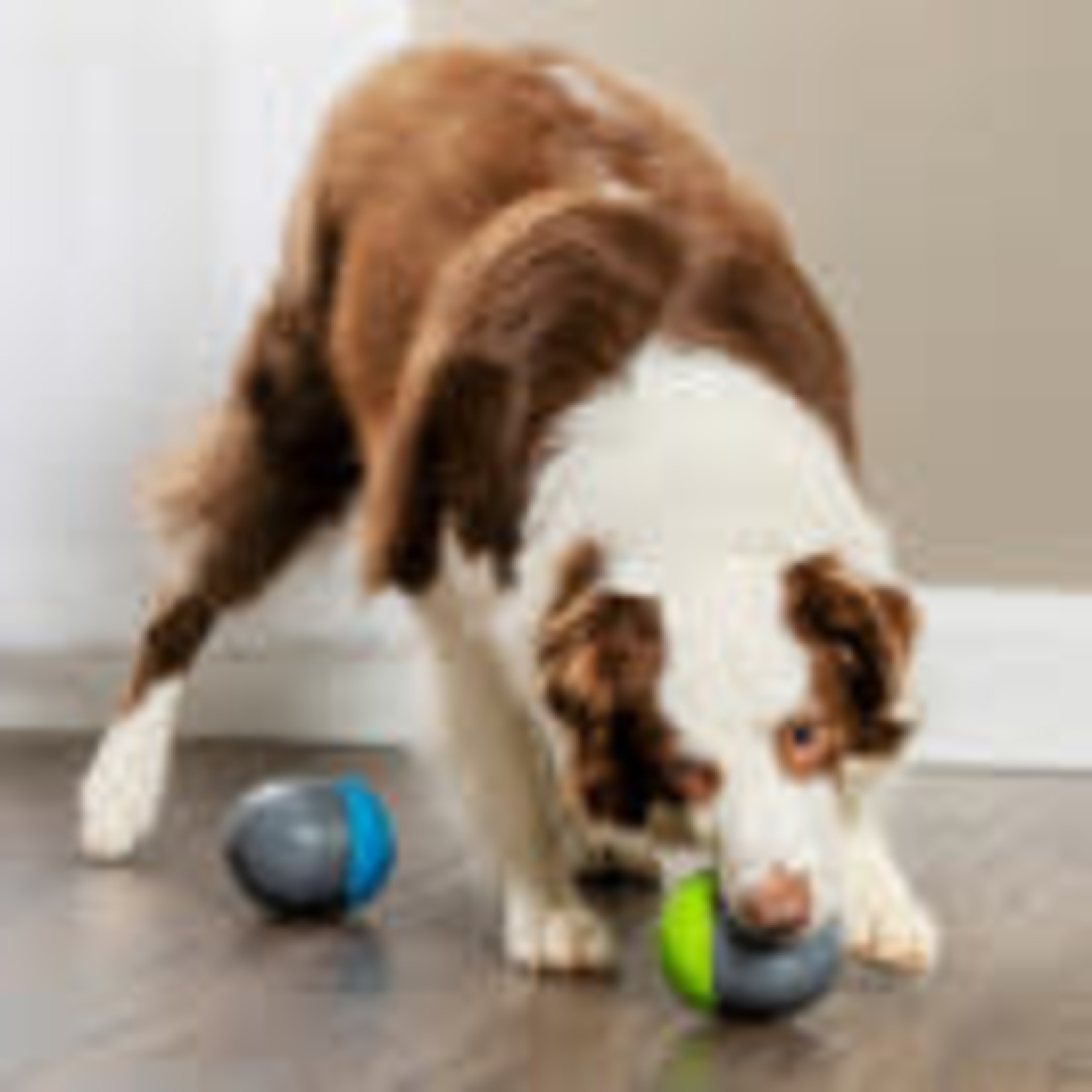 Pet Safe / Radio Systems Corp. Pet Safe Ricochet Electronic Dog Toy