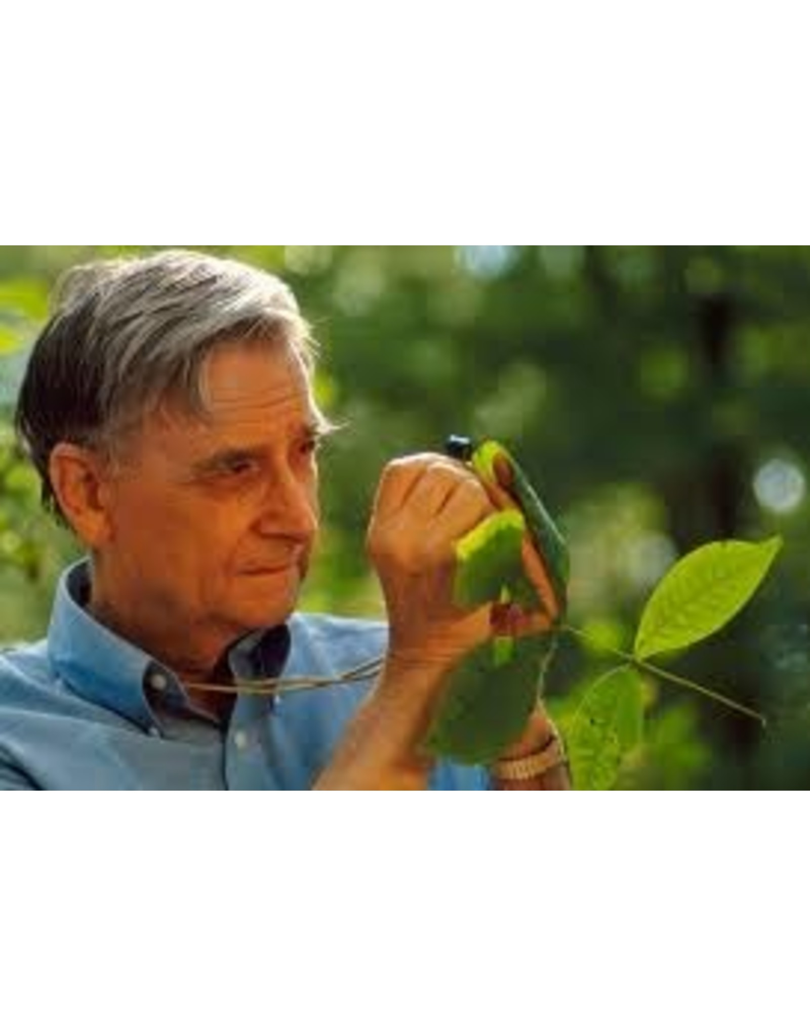 Books Tales From the Ant World by Edward O. Wilson