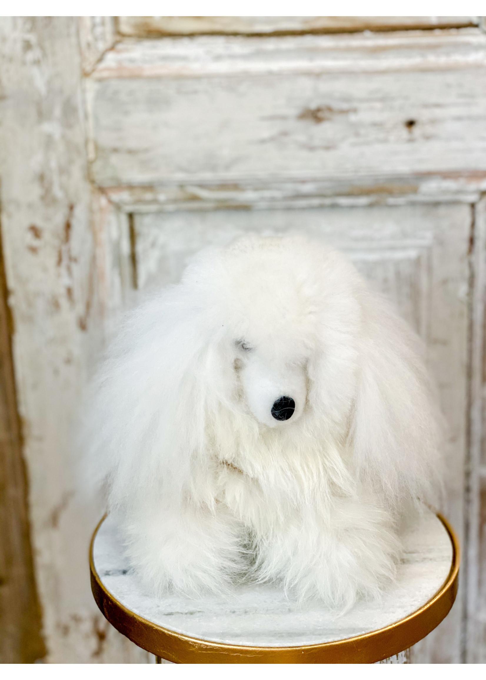 Alpaca Puppy