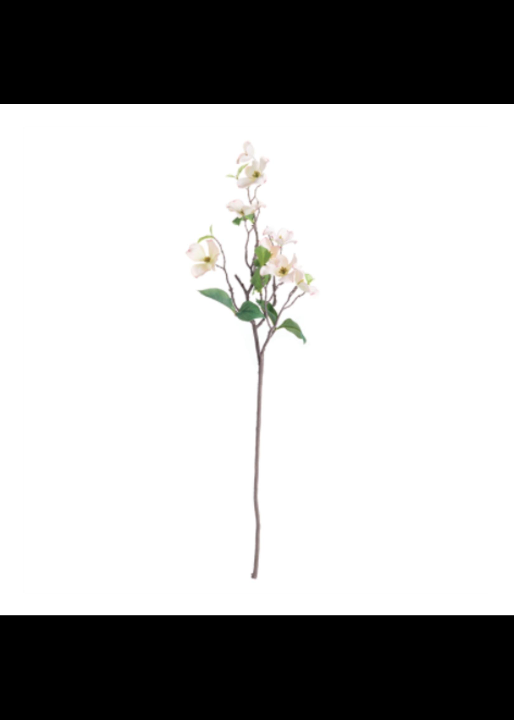 Pink Dogwood Blossom Branch