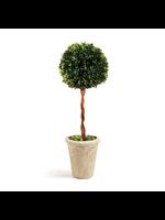 """Boxwood Topiary - Single Ball Tree 18.5"""""""