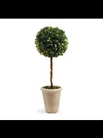 """Boxwood Topiary - Single Ball Tree 23.25"""""""