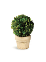 Boxwood Topiary Mini - Ball Single (Round Pot)