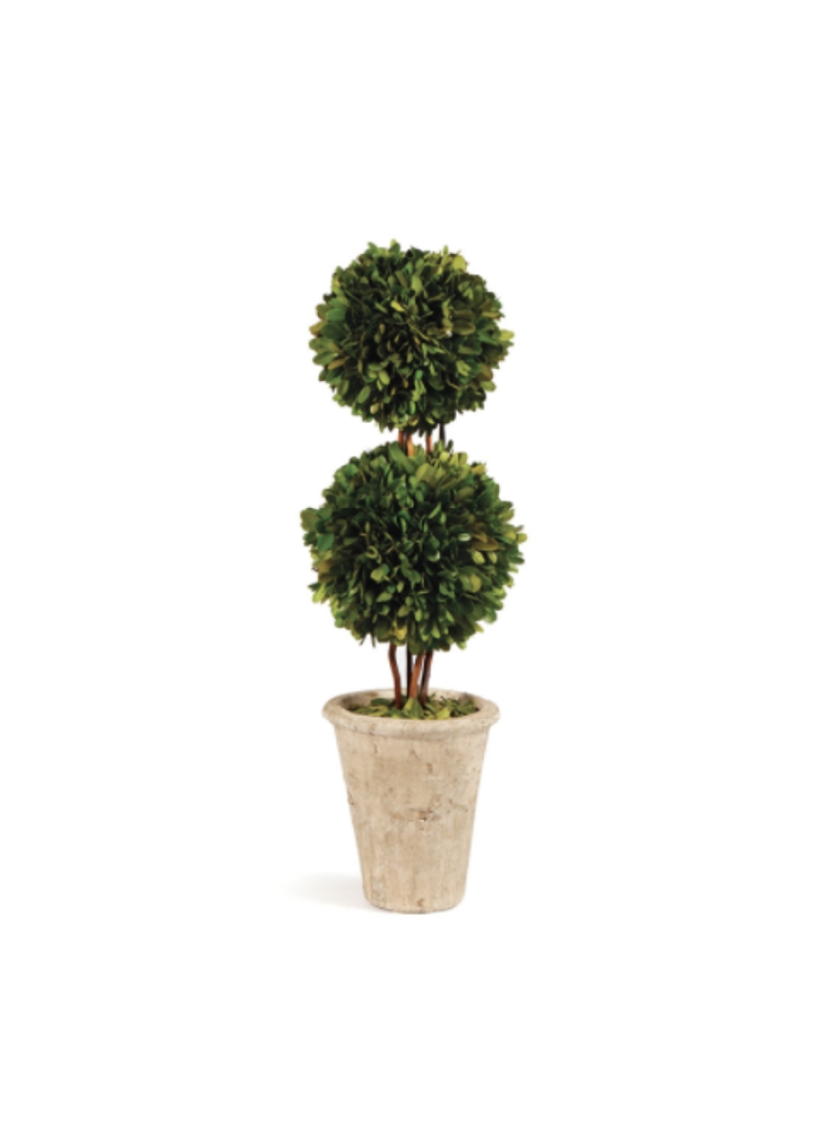 """Boxwood Topiary - Double Ball Tree 20"""""""