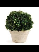 Boxwood Topiary - Medium Ball