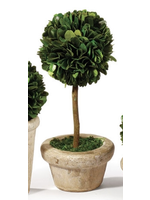 Boxwood Topiary Mini - Medium Tree Single