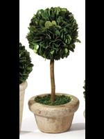 Mini Boxwood Topiary - Medium Single Ball Tree