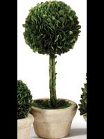 Mini Boxwood Topiary - Large Single Ball Tree