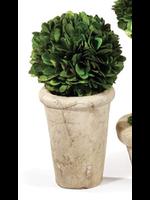 Mini Boxwood Topiary - Single Ball (tall pot)