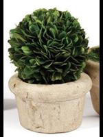 Mini Boxwood Topiary - Large Single Ball