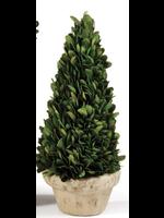 Mini Boxwood Topiary - Natural Cone Tree
