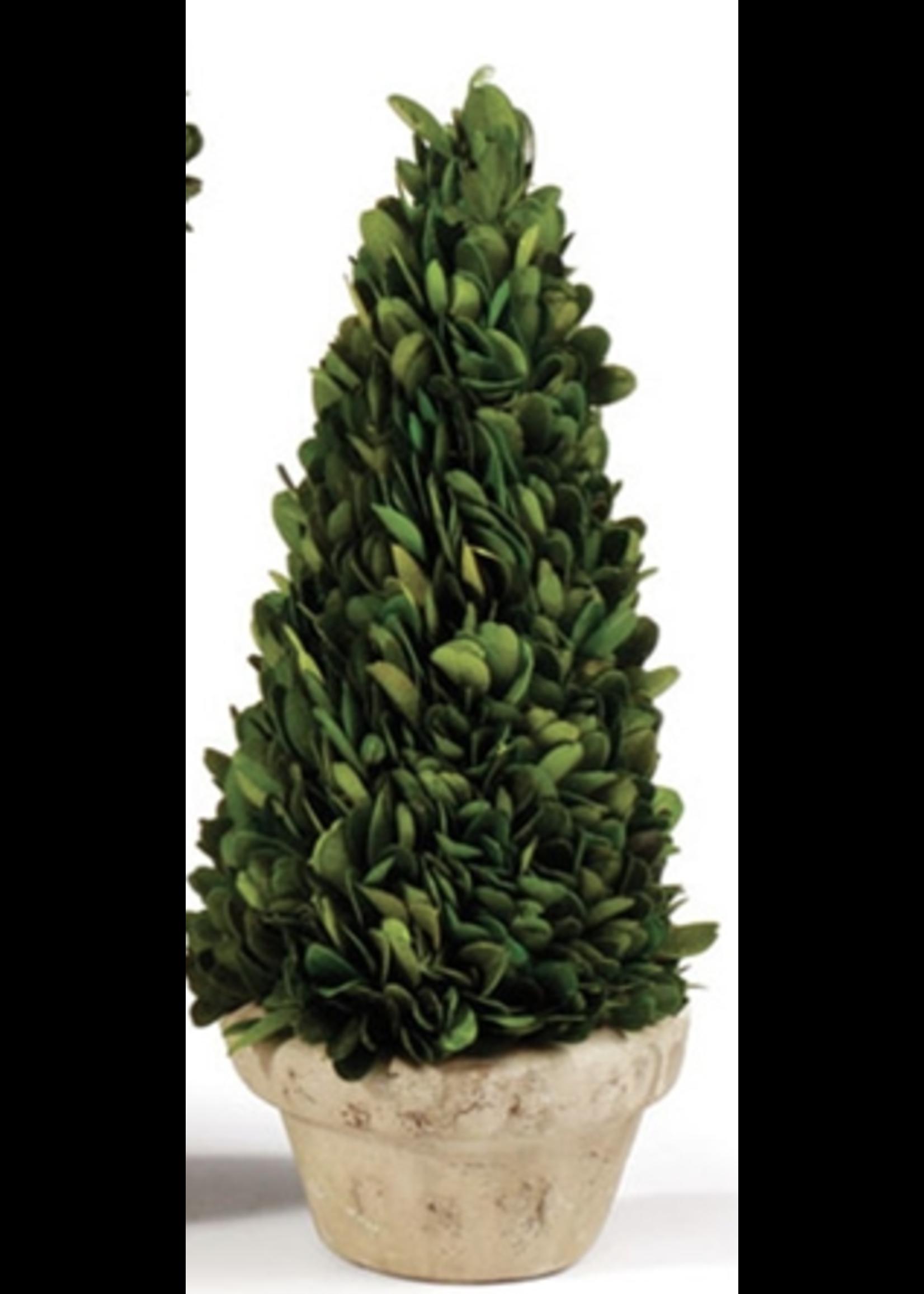 Boxwood Topiary Mini - Natural Cone Tree
