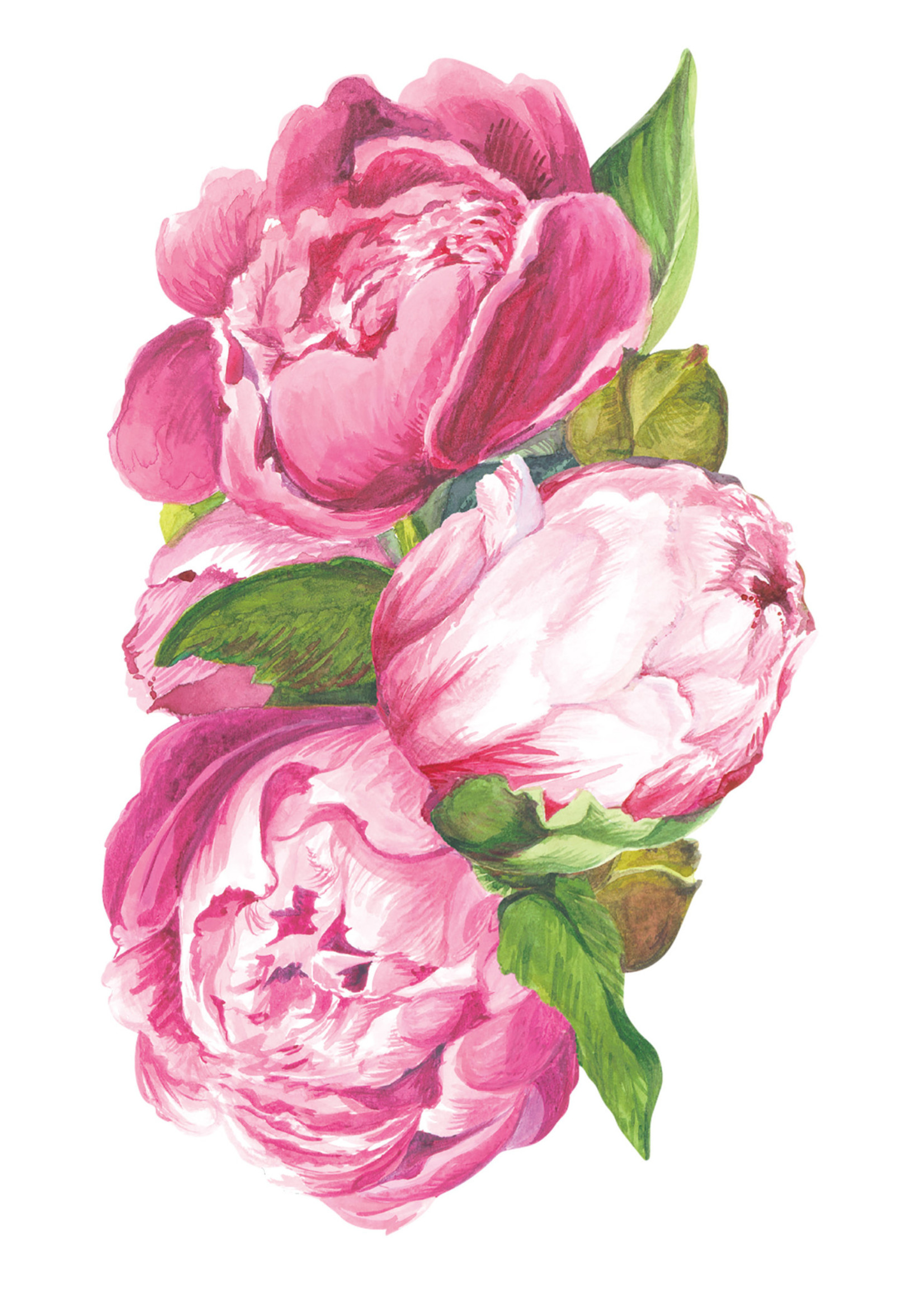 Hester & Cook Table Accents - Peony (pack of 12)