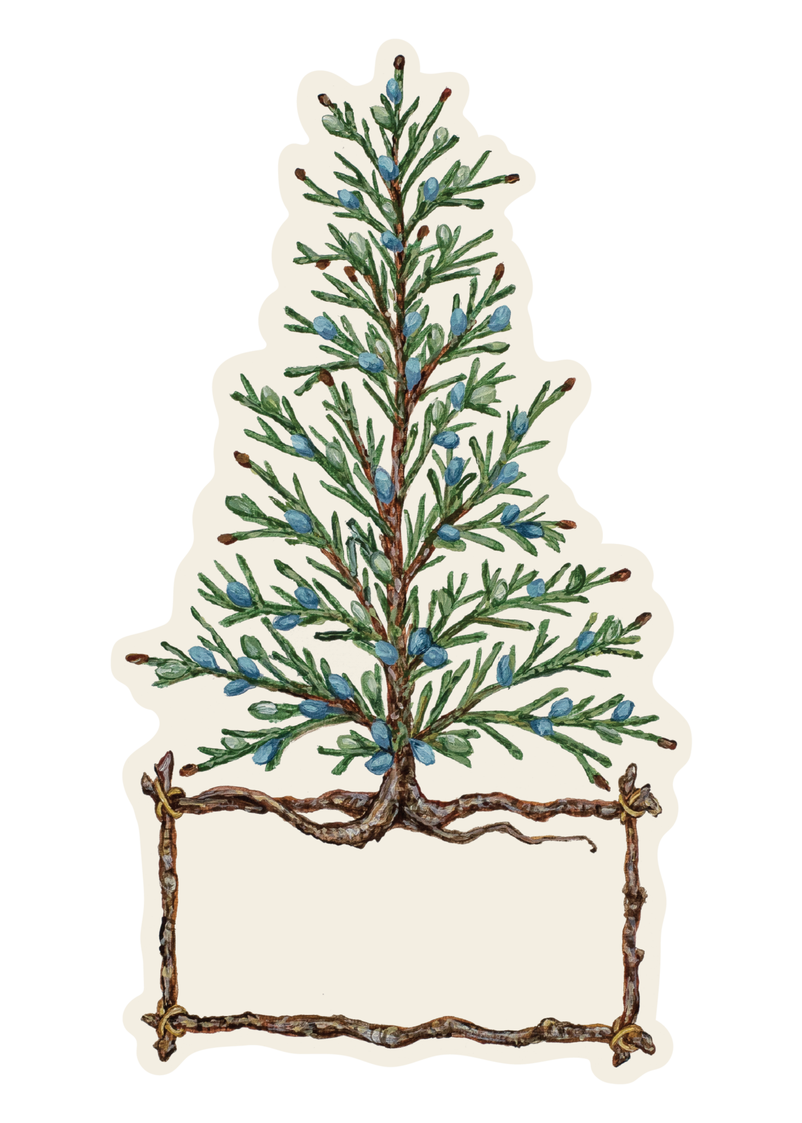 Hester & Cook Table Accents - Cedar Tree (pack of 12)