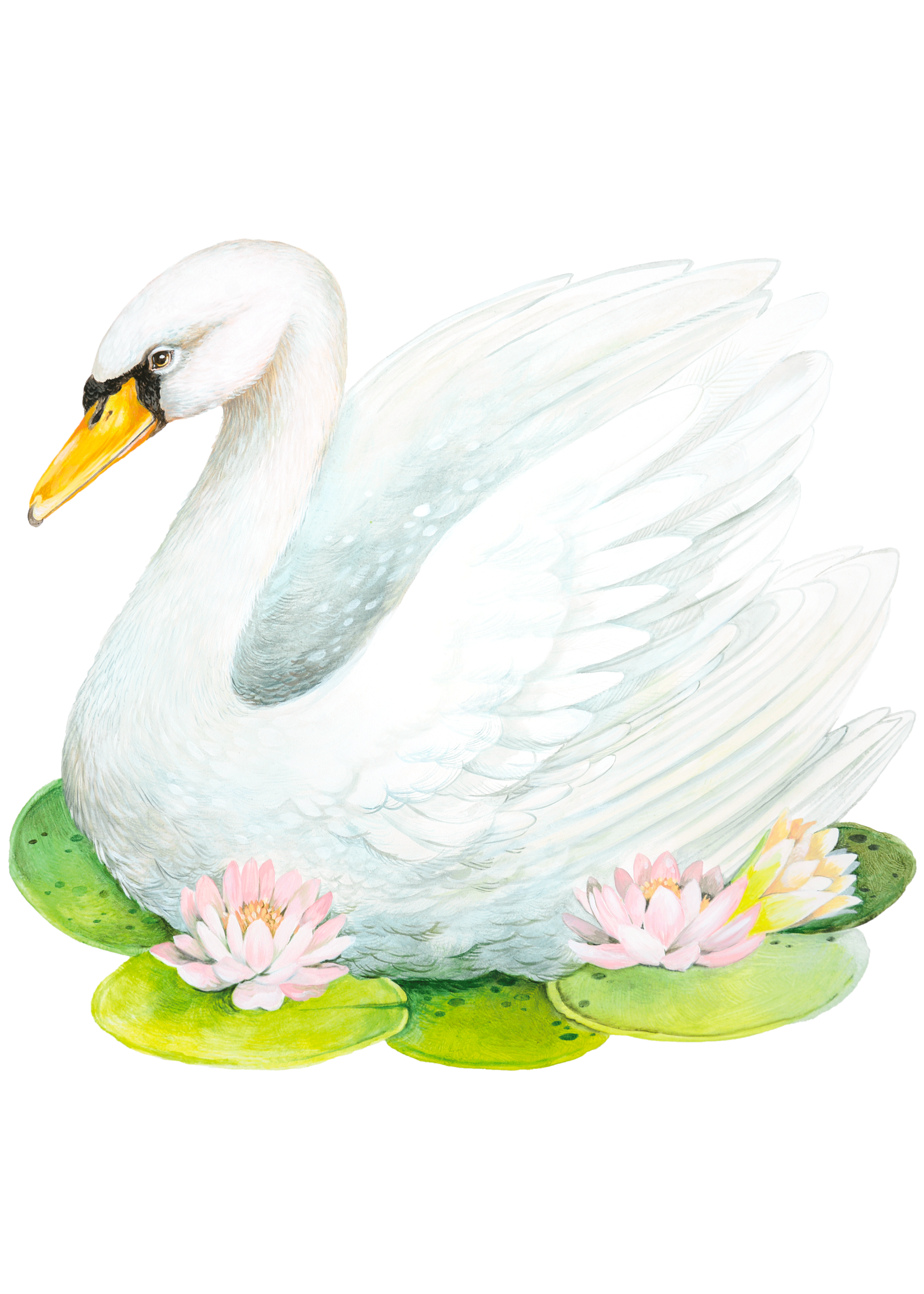 Hester & Cook Paper Placemats - Fabulous Swan (12 sheets)