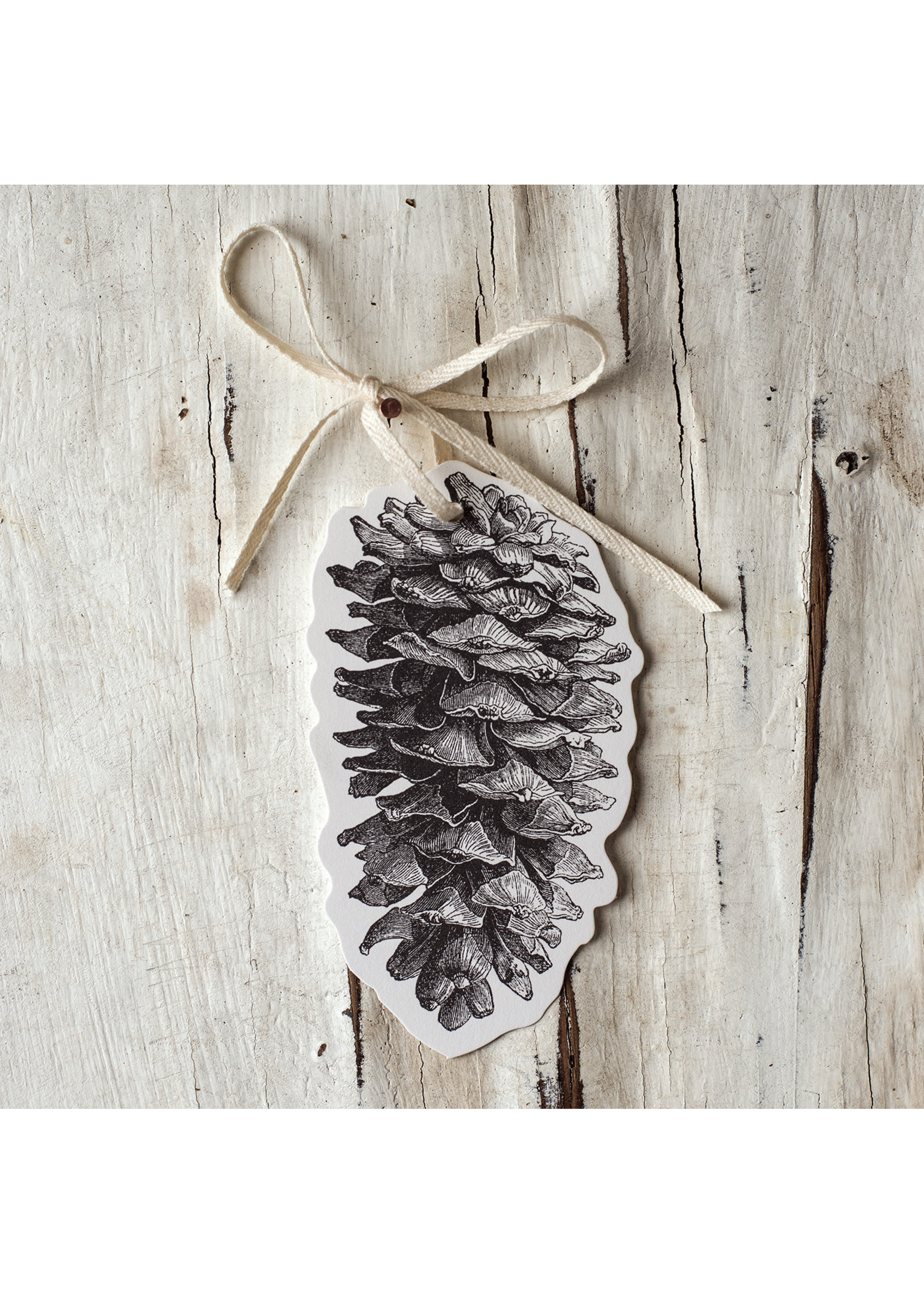Hester & Cook Gift Tags - Pinecone (Pack of 12)