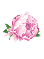 Hester & Cook Gift Tags - Peony (pack of 12)
