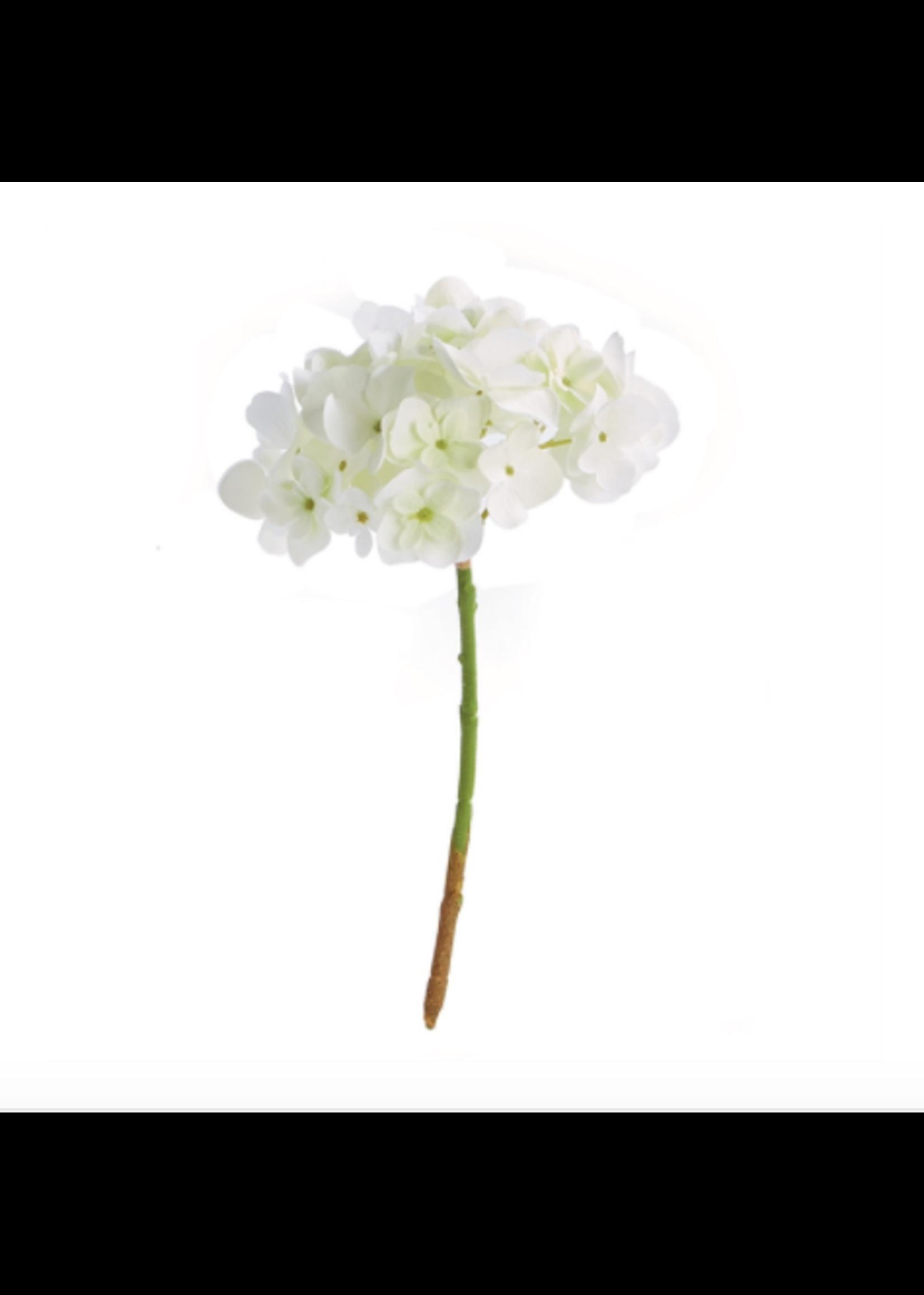 Hydrangea Cutting White