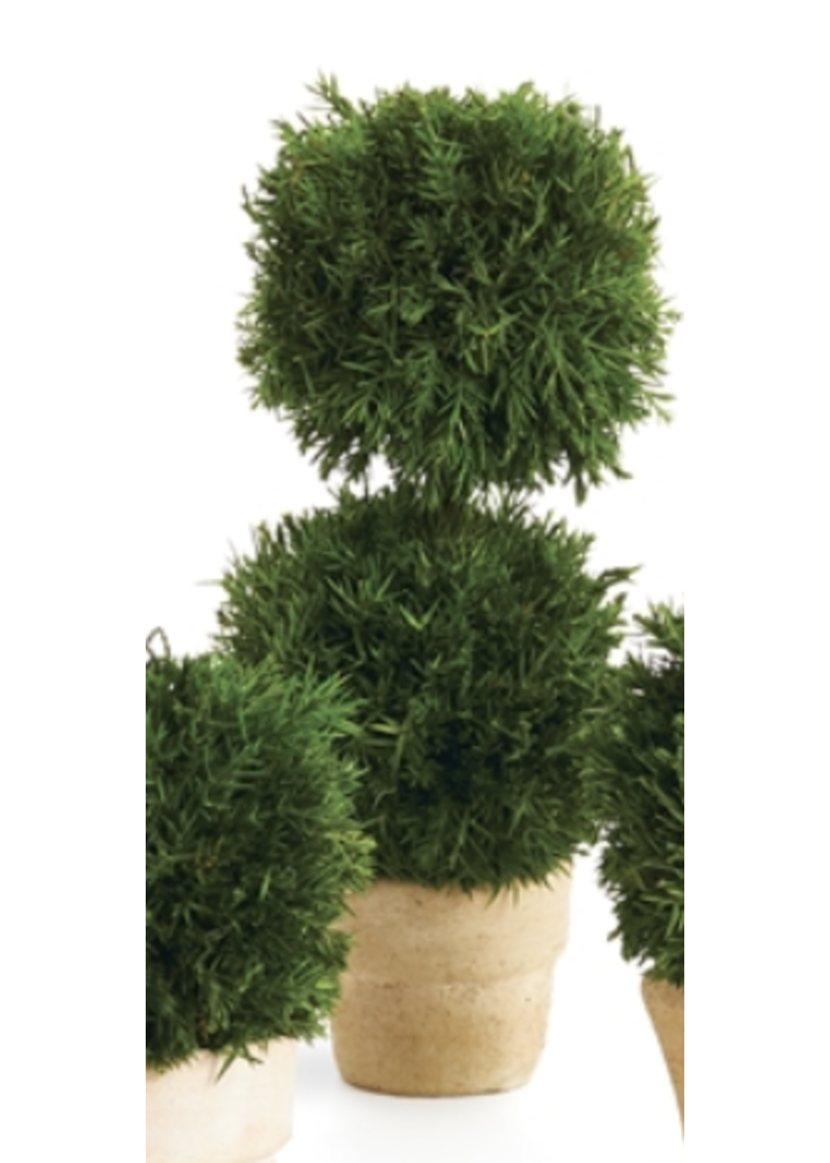 Cypress Mini Topiary in Pot - Double Ball