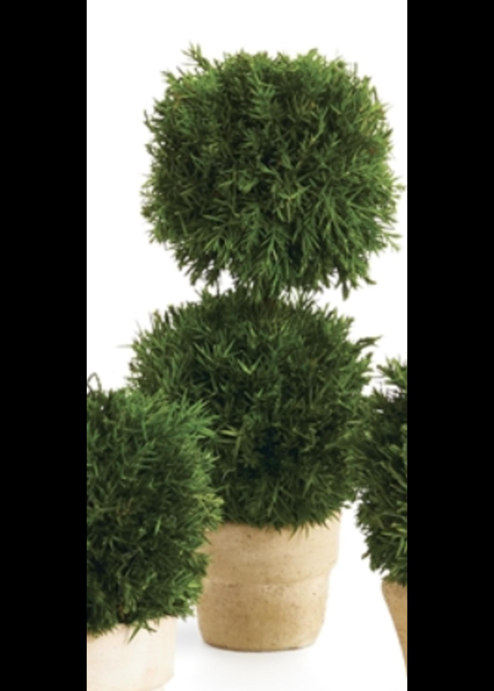 Cypress Topiary Mini - Tree Double