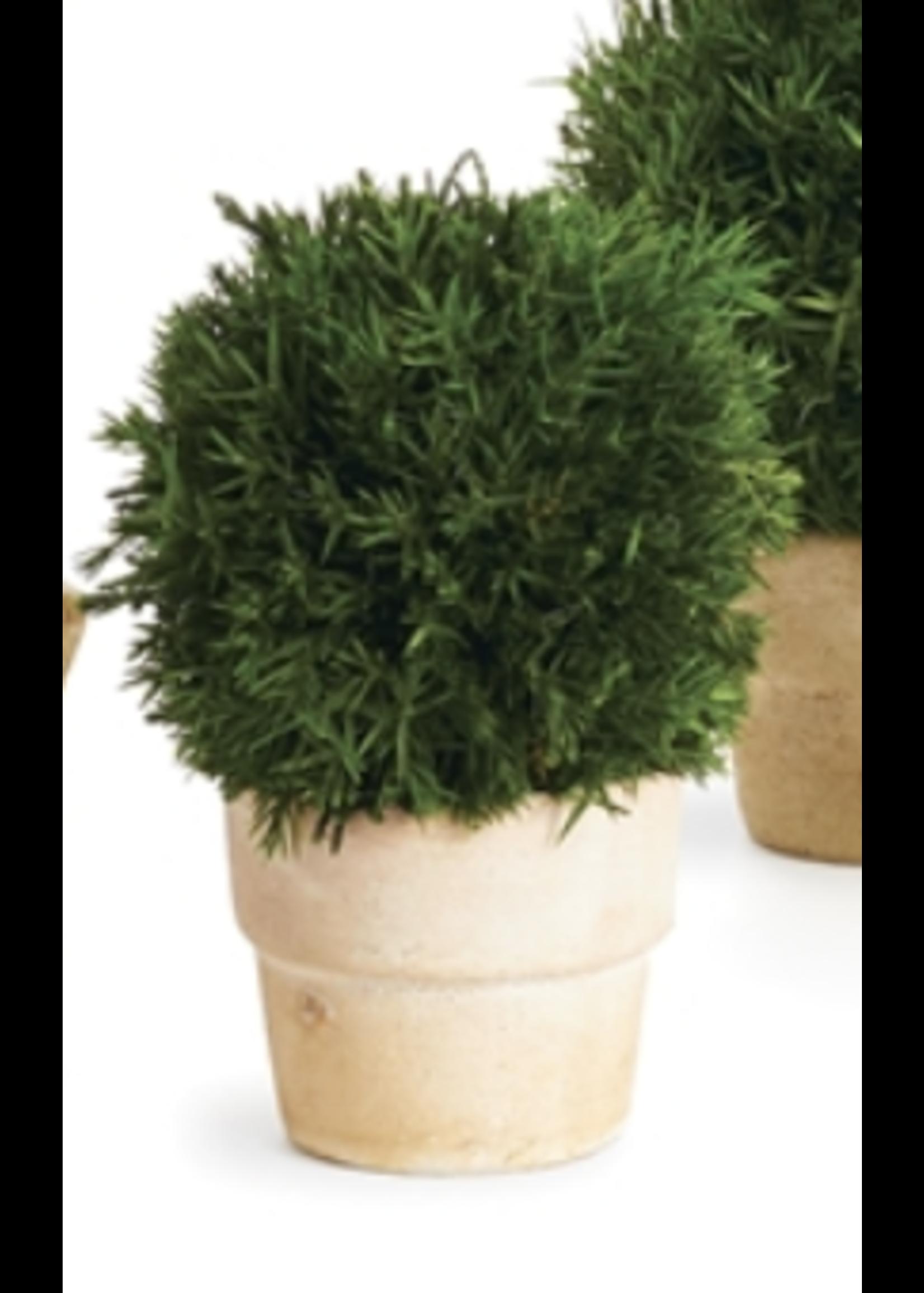 Cypress Topiary Mini - Ball Single (Round Pot)