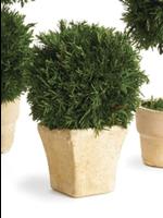 Cypress Topiary Mini - Ball Single (Square Pot)