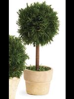 Cypress Mini Topiary in Pot - Single Ball Tree Round