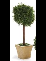 Cypress Mini Topiary in Pot - Single Ball Tree Square