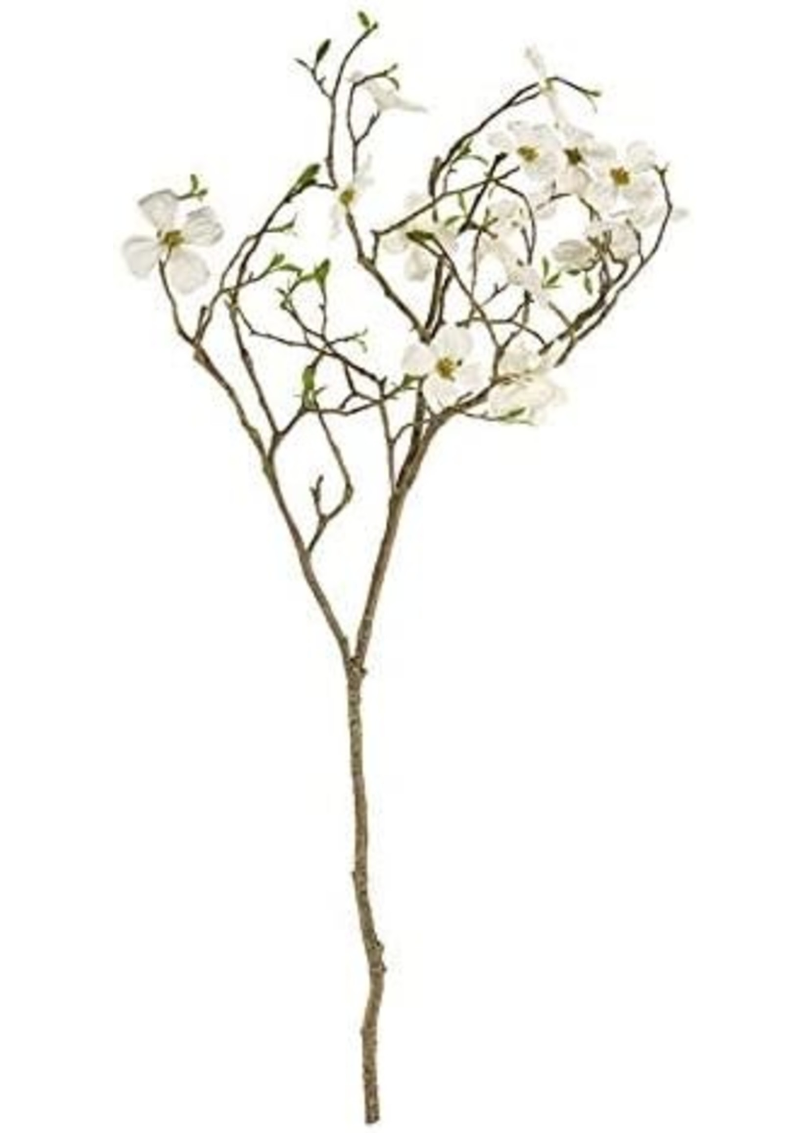 White Dogwood Blossom Branch