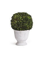 Boxwood Topiary - Ball in Pot Large