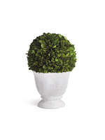 Boxwood Topiary - Ball in Pot Small