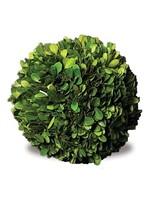 "Boxwood Topiary - Ball 4"""