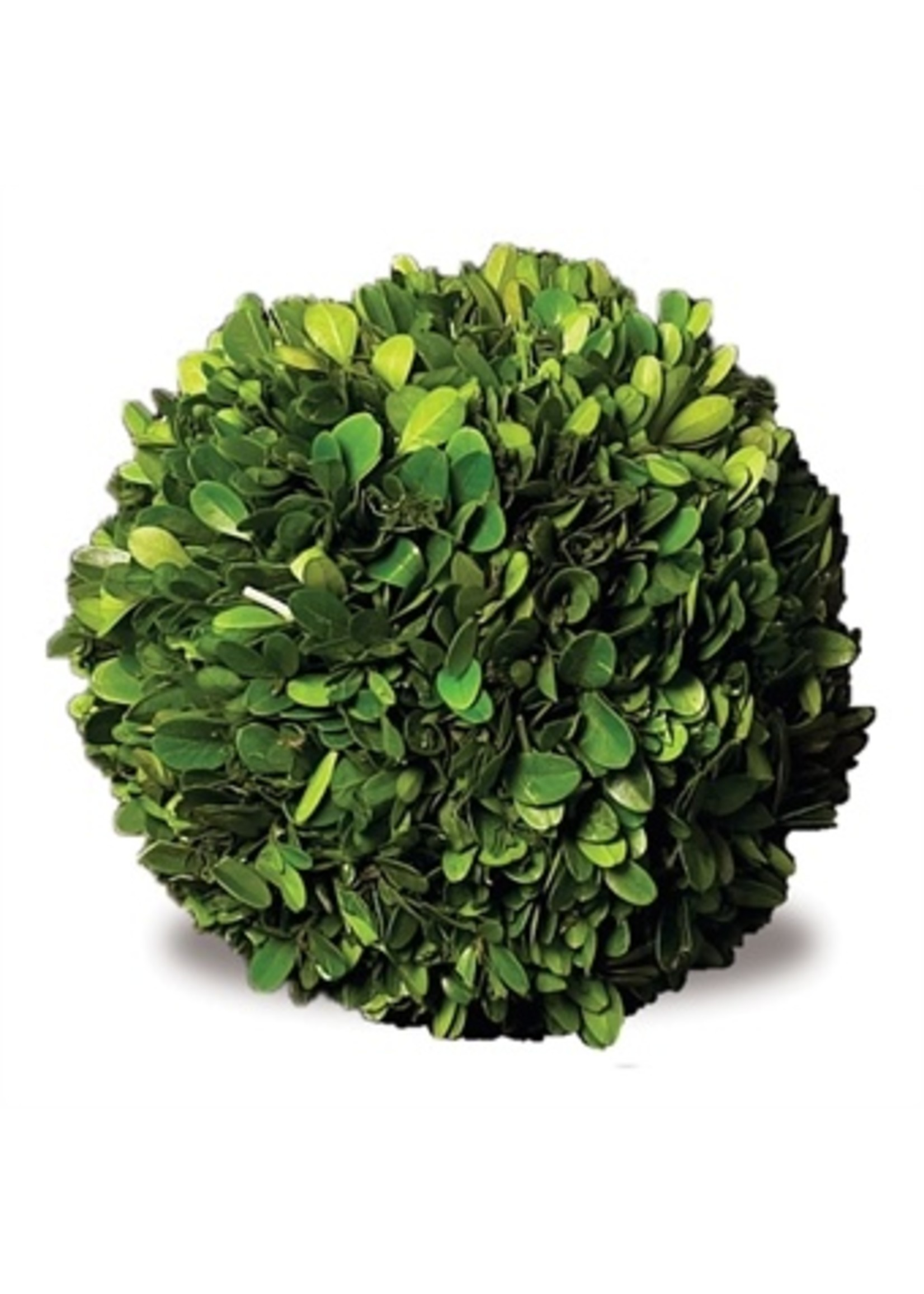 "Boxwood Topiary - Ball 10"""