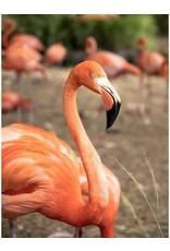 Pink Picasso Kit- Frannie Flamingo