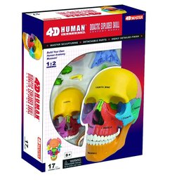 4D Master 4D DIDACTIC EXPLODED SKULL