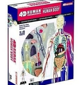 4D Master 4-D TRANSPARENT HUMAN BODY