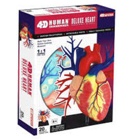 4D Master HUMAN HEART ANATOMY MODEL